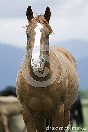 Free Horse Stock Photos - 10088173