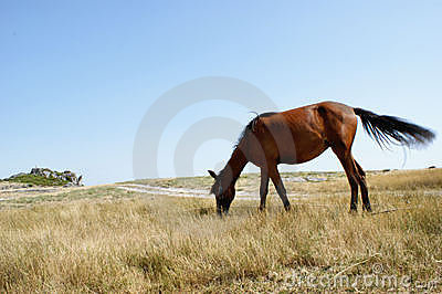 Horse in National Park of Geres, north of Portugal