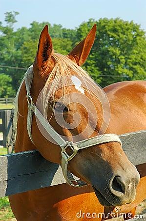 Free Horse Stock Photo - 188780