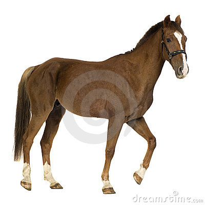 Free Horse Royalty Free Stock Images - 3369389