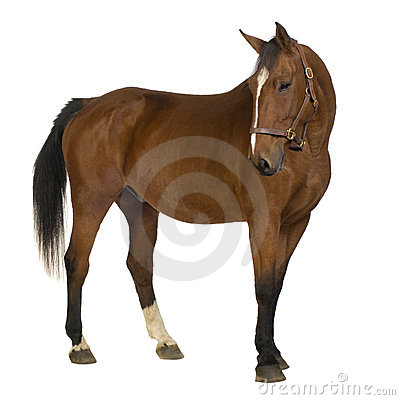 Free Horse Royalty Free Stock Images - 3369449