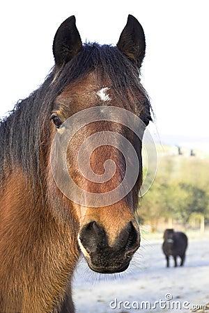 Free Horse Stock Photo - 4344630