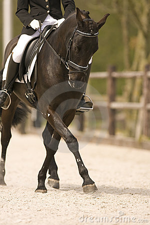 Free Horse Stock Photos - 4976453
