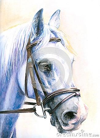 Free Horse Royalty Free Stock Photos - 7075048