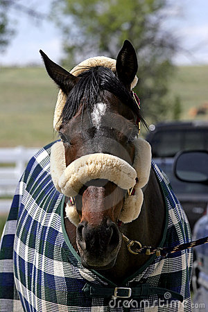 Free Horse Accessorized Royalty Free Stock Photography - 687397