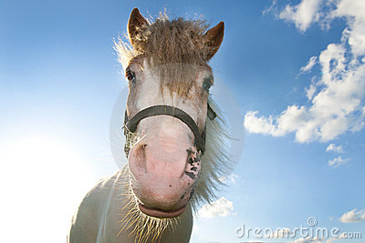 Horse against blue sky