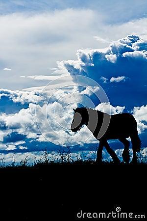 Horse against cloudscape