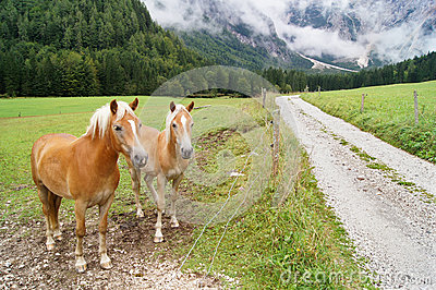 Horse in alps