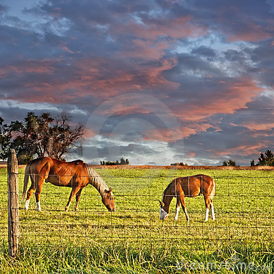 Free Horse And Colt Grazing Stock Photography - 21701432