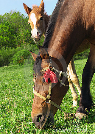 Free Horse And Foal Royalty Free Stock Images - 13246869