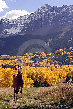 Free Horse And Mountains Royalty Free Stock Photo - 52835