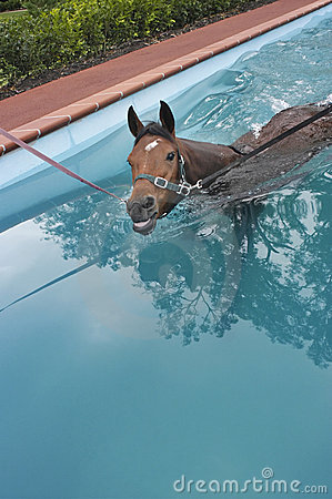 Horse aquatic training