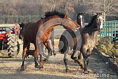 Horse attack