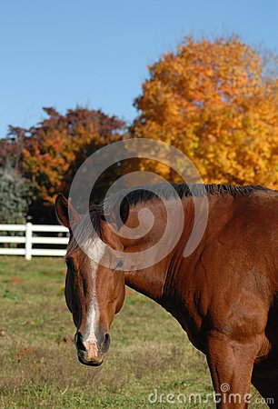 Horse in Autumn field