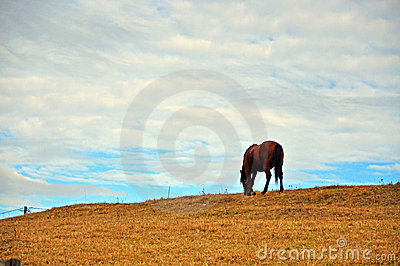 Horse on autumn hill