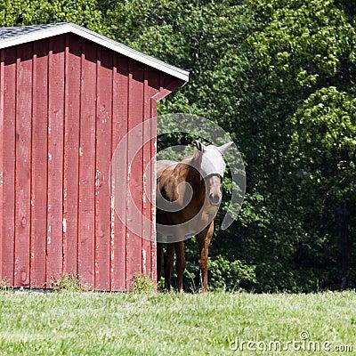 Horse by Barn