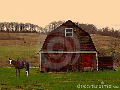 Horse and barn at sunrise