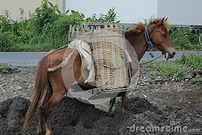 Horse and basket Editorial Photo
