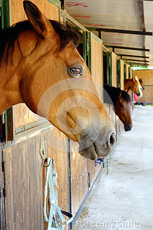 Free Horse Brown Horses Stables Closeup Stock Photos - 54346703