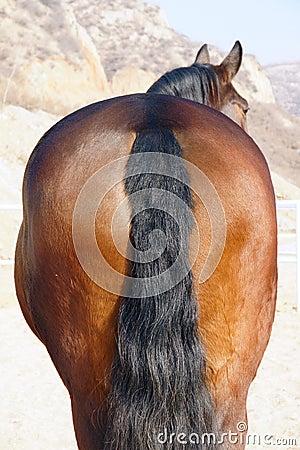 Horse buttock