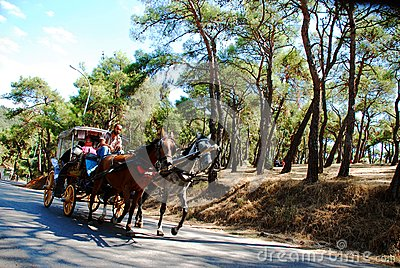 Horse carriage Editorial Stock Photo