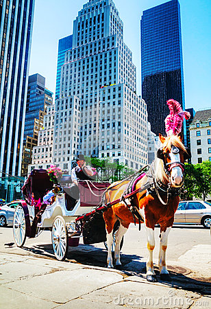 Free Horse Carriage At The Central Park In New York City Stock Photography - 33013152