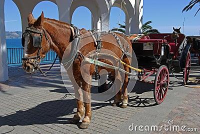 Horse & carriage, Balcony of Europe, Nerja, Spain.
