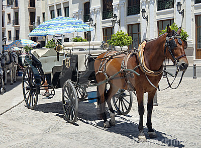Horse and carriage for hire