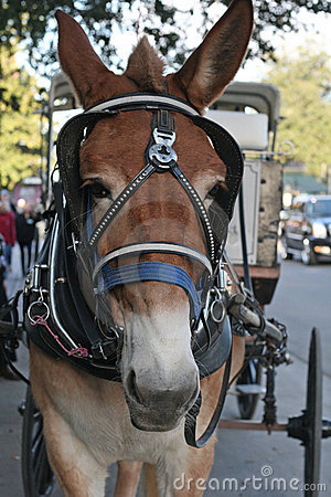 Horse with carriage in New Orleans.