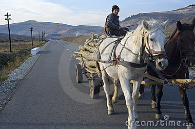 Horse cart Editorial Image