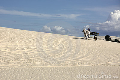 Horse Cart On A Brazilian Dune Editorial Photography