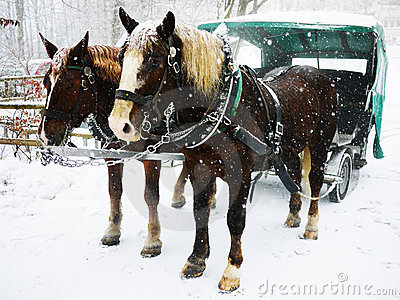 Horse cart in the snow