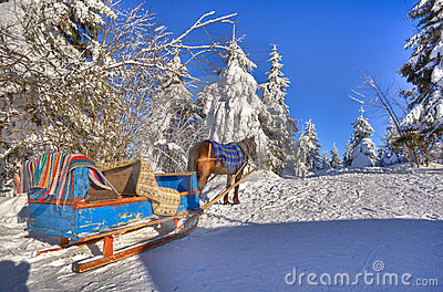 A horse and cart are in the snow-bound fir-trees