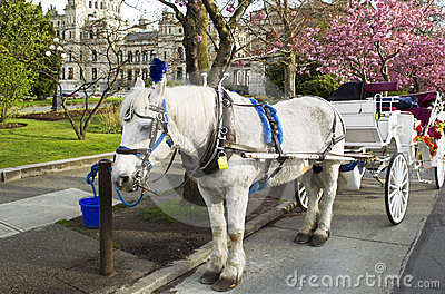 Horse and Cart in Victoria Canada