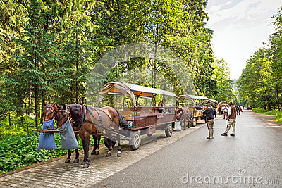 Horse carts in Tatra National Park Editorial Photography