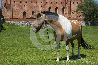 Horse with the castle in the background