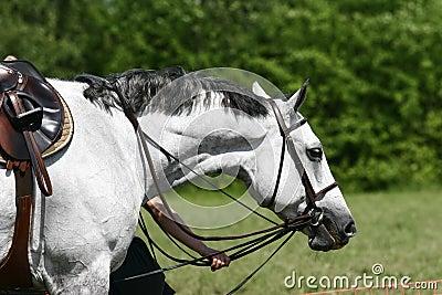 Horse on championship