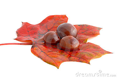 Horse chestnuts on leaf