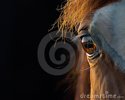 Horse Closeup Stock Photography - Image: 2981052