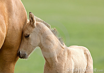 Horse And Colt Stock Images - Image: 14698484