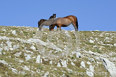 Horse with colt