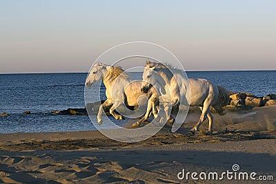 Horse Companions