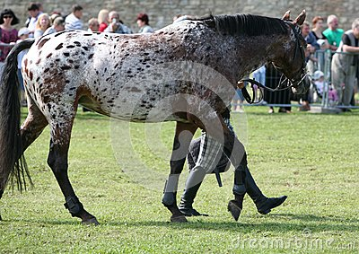 Horse at competition