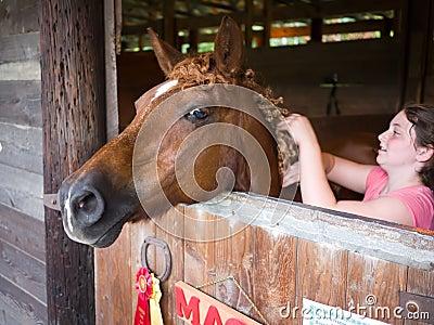 Horse Cornish Fair Editorial Photo