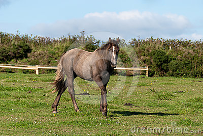 Horse in Cornwall