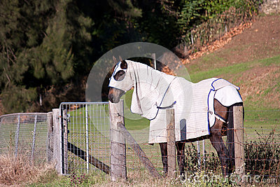 Horse covered in blanket and hood