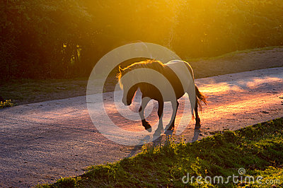 Horse crossing the road