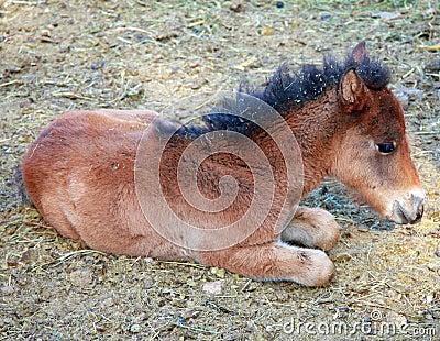 Horse cub