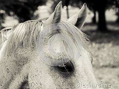 Horse detail (112)