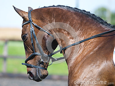 Horse Doing Dressage